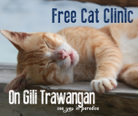 Free Cat Clinic On Gili Trawangan