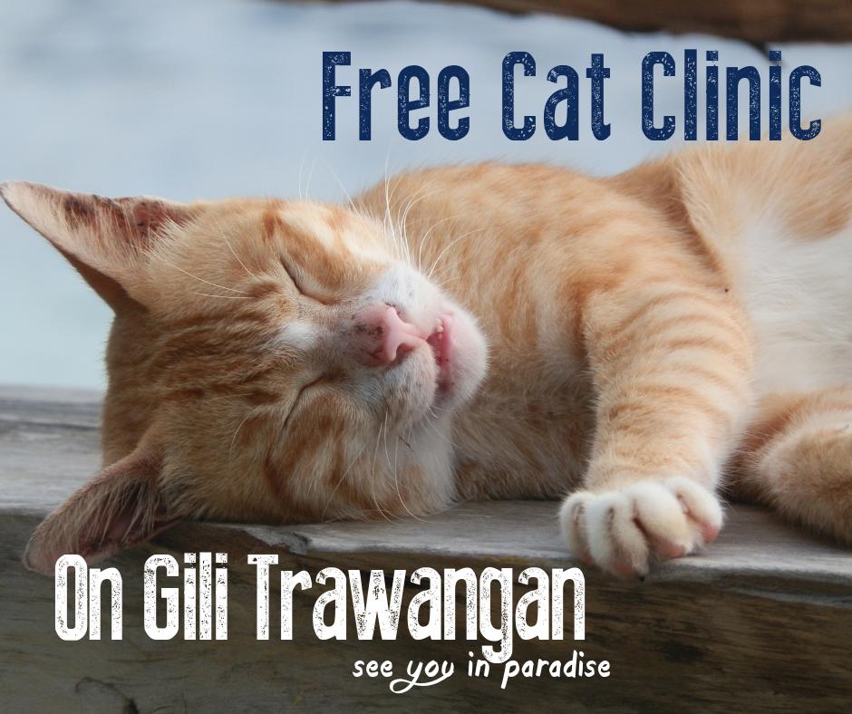 Free Cat Clinic On Gili Trawangan