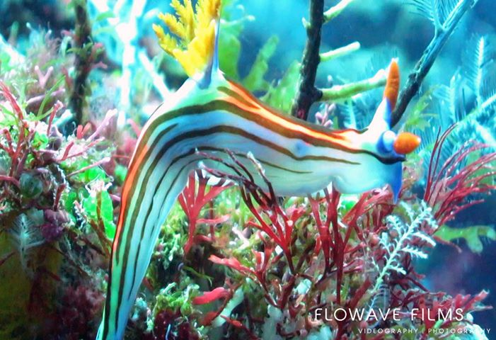 nudibranch-coral-reef-eart-day-gili-islands-lombok-indonesia
