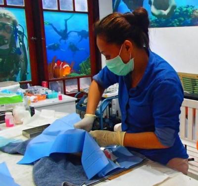cat-clinic-gili-trawangan-may-2014-4