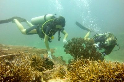 Coral gardening: helping damaged coral to recover. Gili Islands