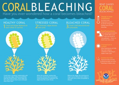 coral bleaching info graphic NOOA