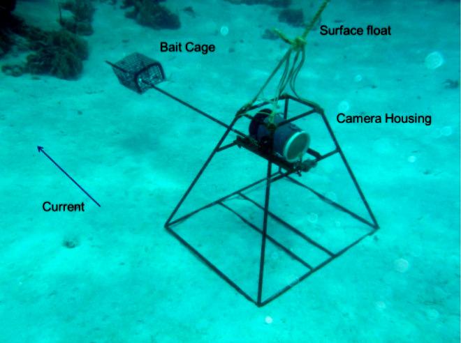 BRUV-baited-remote-underwater-video